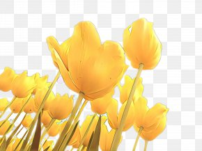 Crocus Lily Family - Lily Flower Cartoon PNG