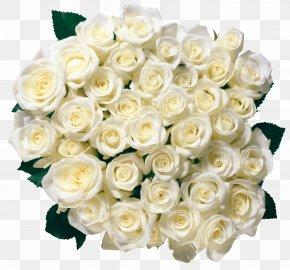 White Rose Image Flower White Rose Picture - Rose Flower White PNG