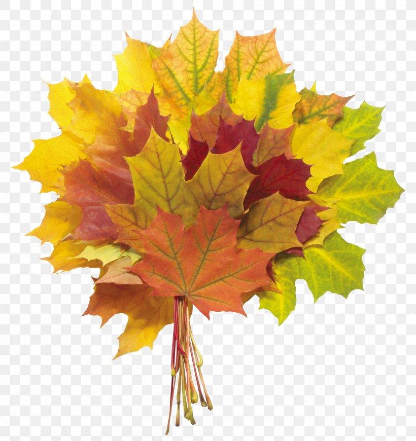 Autumn Leaf Color Photography Clip Art, PNG, 2000x2122px, Autumn, Autumn Leaf Color, Flowering Plant, Leaf, Maple Leaf Download Free