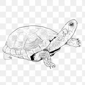 Turtle Drawing Line Art - Sea Turtle Pond Turtles Line Art Tortoise PNG
