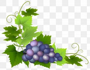 Grape Clip Art Image - Common Grape Vine Grape Pie PNG