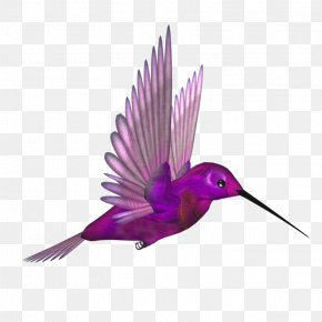 Purple Beak Bird Fly - Hummingbird Flight Beak Wing PNG