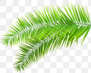 Palm Tree Tropical Tropic - Clip Art Palm Trees Leaf Palm Branch PNG