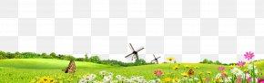 Spring Summer Green Background - Green Safflower Google Images PNG