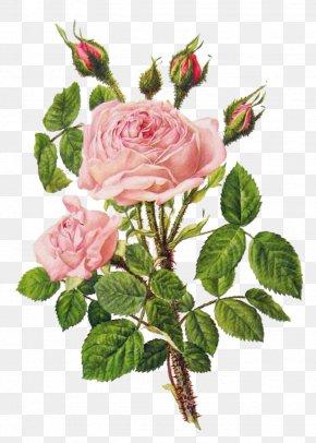 Pink Peony Flower Bouquet - Flower Bouquet Rose Floral Design Illustration PNG