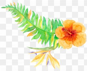 Tropical Plants - Tropics Tropical Vegetation PNG
