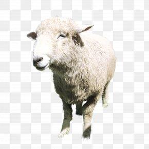 Aries Standing - Boer Goat Sheep Milk Lanolin Tmall PNG