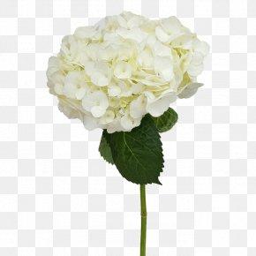 Flower Garden Hydrangea - French Hydrangea Cut Flowers PNG