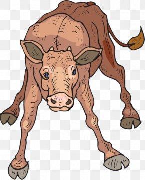 Calf Cliparts - Beef Cattle Calf Bull Clip Art PNG