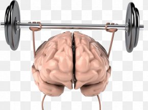 Brain Sport Weightlifting - Brain Physical Exercise Physical Strength Cognitive Training Human Body PNG