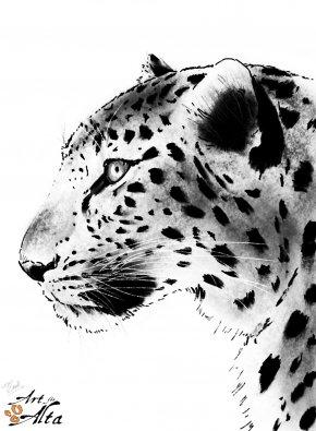 Leopard - Tiger Amur Leopard Snow Leopard Amur River Cheetah PNG