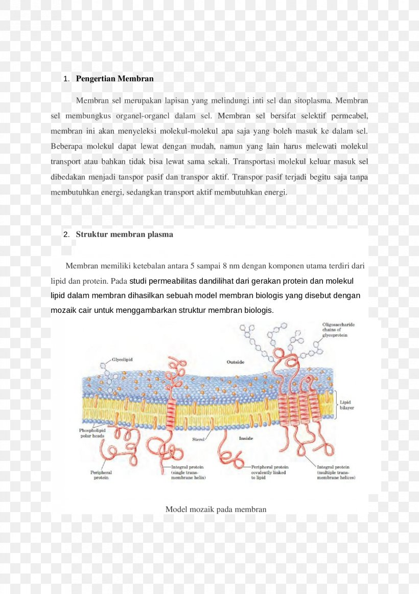 model a trans diagram trinity school line organism fluid mosaic model  png  1653x2339px  line organism fluid mosaic model
