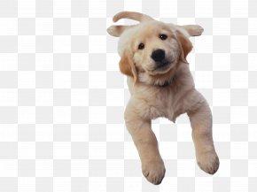 Dogs - Coton De Tulear Maltese Dog Bichon Frise Puppy Cat PNG