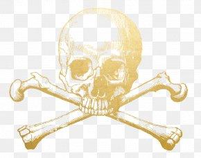 Skull - Skull And Crossbones Human Skull Symbolism Skull And Bones Society PNG