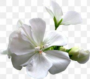 Flower Spring - Artificial Flower Plant Vecteur PNG
