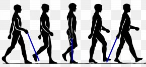 Walking Man Silhouette Collection - Walking Person Clip Art PNG