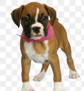 Dog Image - Dog Puppy PNG