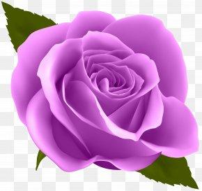 Purple Rose Clip Art Image - Rose Flower Purple Clip Art PNG