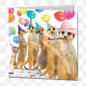 Birthday Cake Greeting Card - Meerkat Wedding Invitation Greeting & Note Cards Birthday Cake PNG