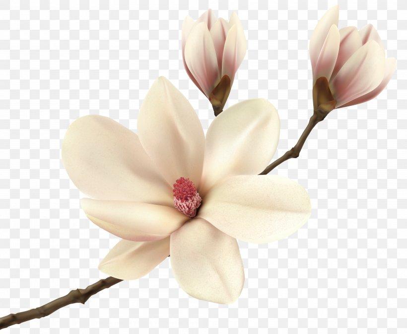 Magnolia Flower Clip Art