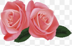 Flower - Hybrid Tea Rose Garden Roses Flower Clip Art PNG