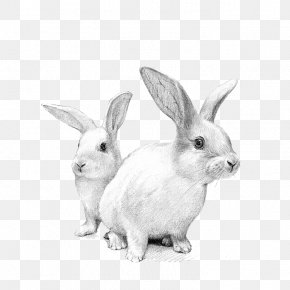 White Rabbit - Domestic Rabbit White Rabbit European Rabbit Cat PNG