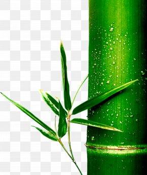 Bamboo - Bamboo Bamboe PNG