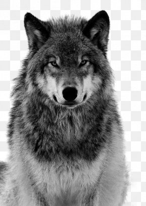Grey Wolf Free Pull Material - Dog Arctic Wolf Coyote Canidae Tiger PNG
