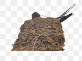 Bird Swallows In The Nest - Swallow Edible Birds Nest PNG