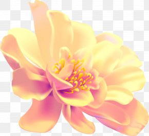 Drawing Flower - Display Resolution Drawing Photography PNG