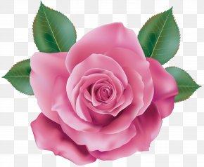 Pink Rose Transparent Clip Art - Rose Pink Quartz PNG
