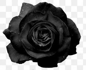 White Rose - Black Rose Flower Garden Roses PNG