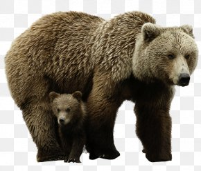 Mother And Son Brown Bear - Brown Bear Polar Bear PNG