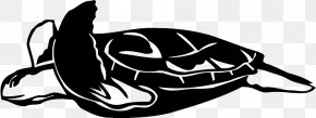 Turtle - Turtle Wall Decal Sticker Polyvinyl Chloride PNG