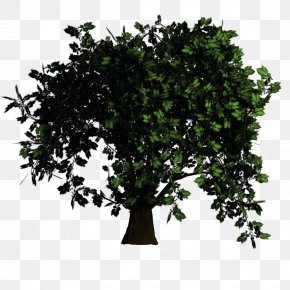 Bonsai - Tree Texture Mapping Rendering Elm PNG