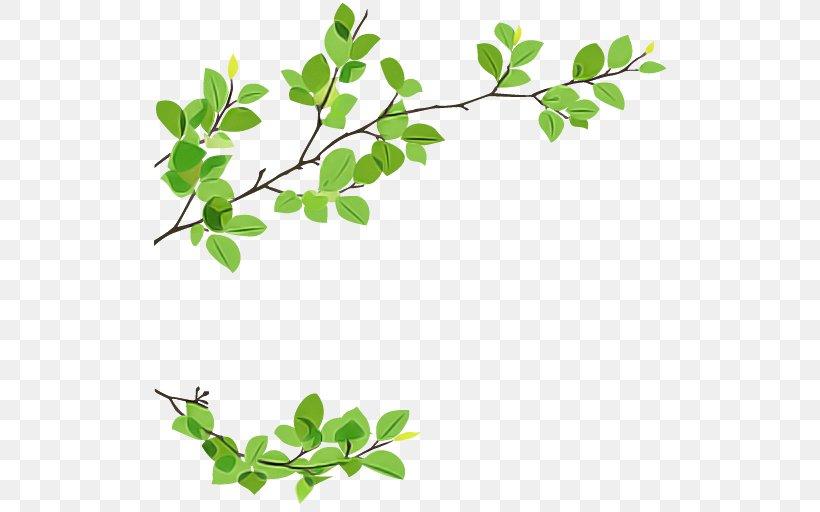 Leaf Plant Flower Branch Tree, PNG, 512x512px, Leaf, Branch, Flower, Flowering Plant, Moringa Download Free