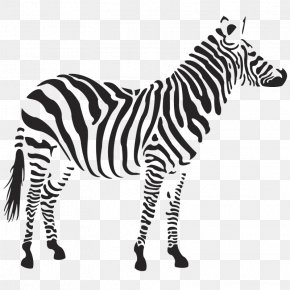 Zebra Image - Zebra Clip Art PNG