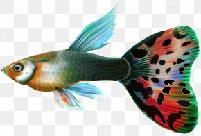 Male Guppy Fish Clip Art - Guppy Fishing Clip Art PNG