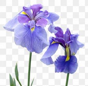 Flower Violet - Irises Perfume Flower Patchouli PNG