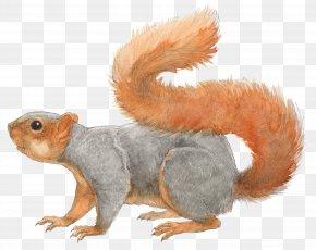 Squirrel - Fox Squirrel Los Angeles Rodent Tree Squirrel PNG