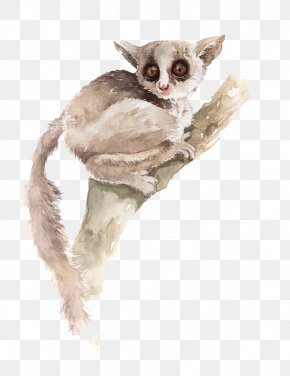 Tree Koala - Koala Watercolor Painting Illustration PNG