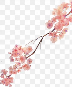 Cherry Blossom - Cherry Blossom Watercolor Painting Watercolour Flowers Petal PNG