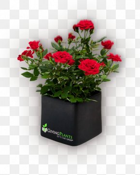 Pot Plant - Houseplant Flowerpot Gift PNG