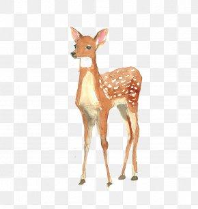Watercolor Deer - Deer Poster Watercolor Painting Illustration PNG