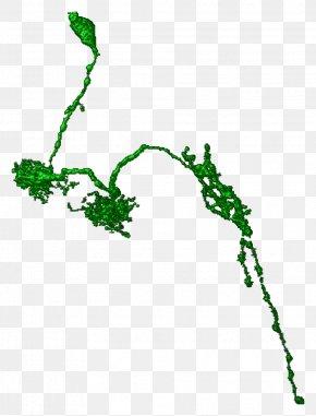 Leaf - Leaf Plant Stem Line Font PNG