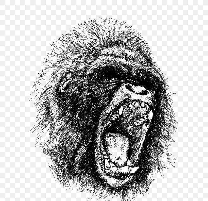 Western Gorilla Ape Drawing Orangutan, PNG, 612x792px, Western Gorilla, Anger, Ape, Black And White, Common Chimpanzee Download Free