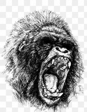 Vector Orangutan - Western Gorilla Ape Drawing Orangutan PNG