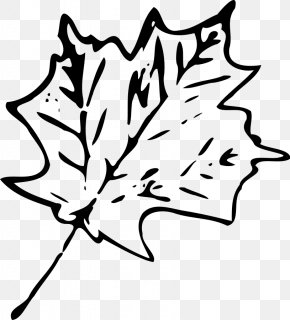Maple Leaf Image - Maple Leaf Autumn Leaf Color Clip Art PNG