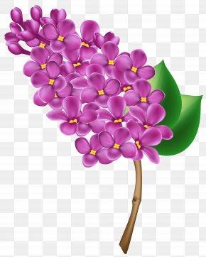 Lilac Transparent Clip Art Image - Lilac Flower Clip Art PNG