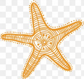 Cartoon Starfish - Starfish Drawing Cartoon Clip Art PNG